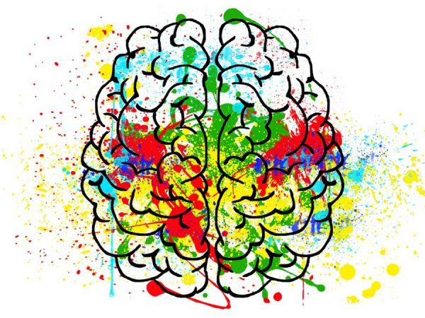 bold.expert - The potential of neuroscience in education